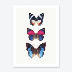 Butterflies III Art Print