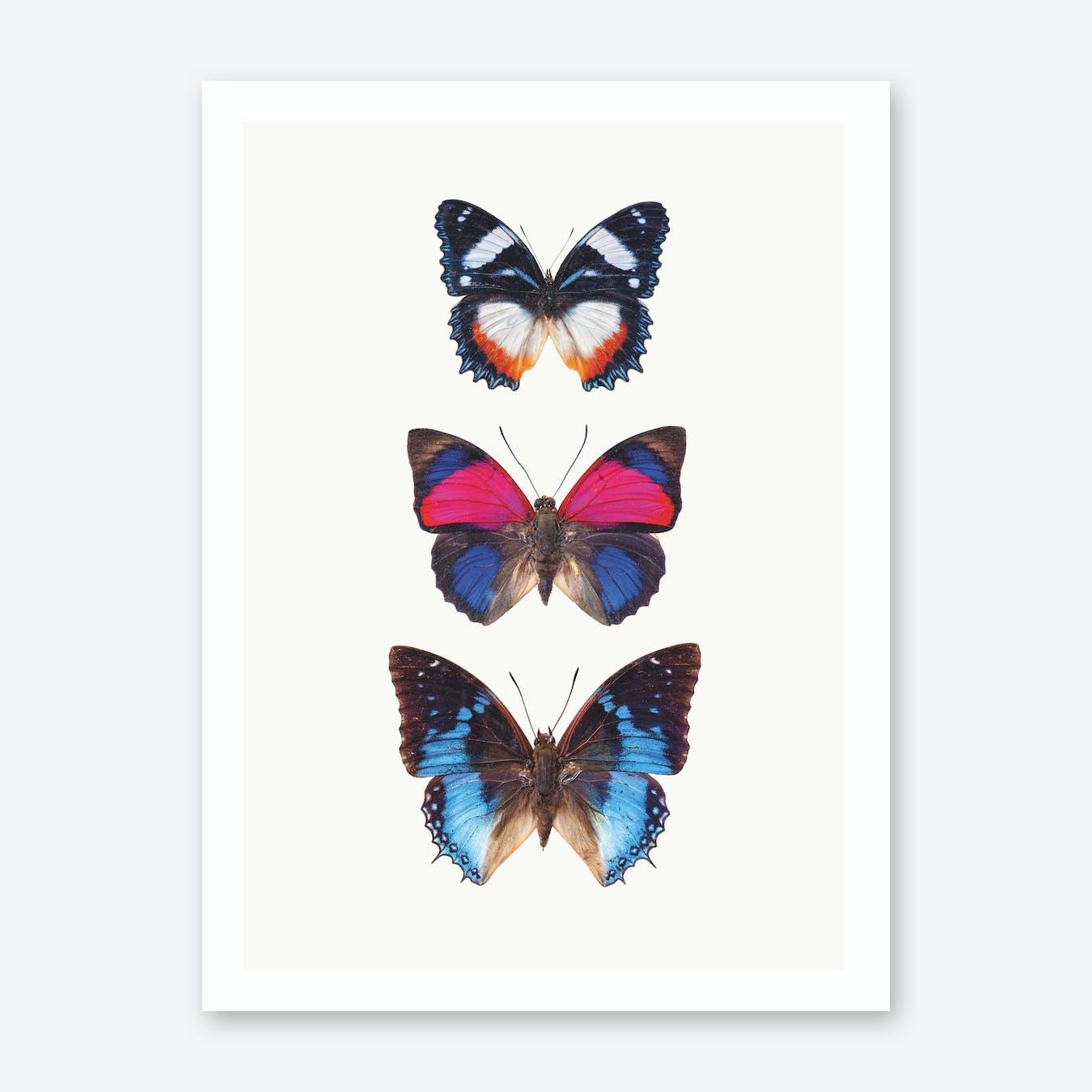 Butterflies III Print