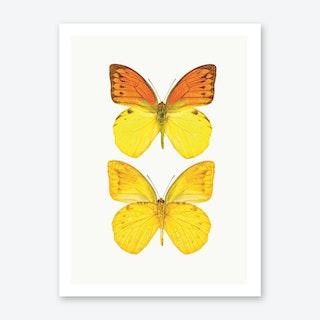 Butterflies VIII Art Print