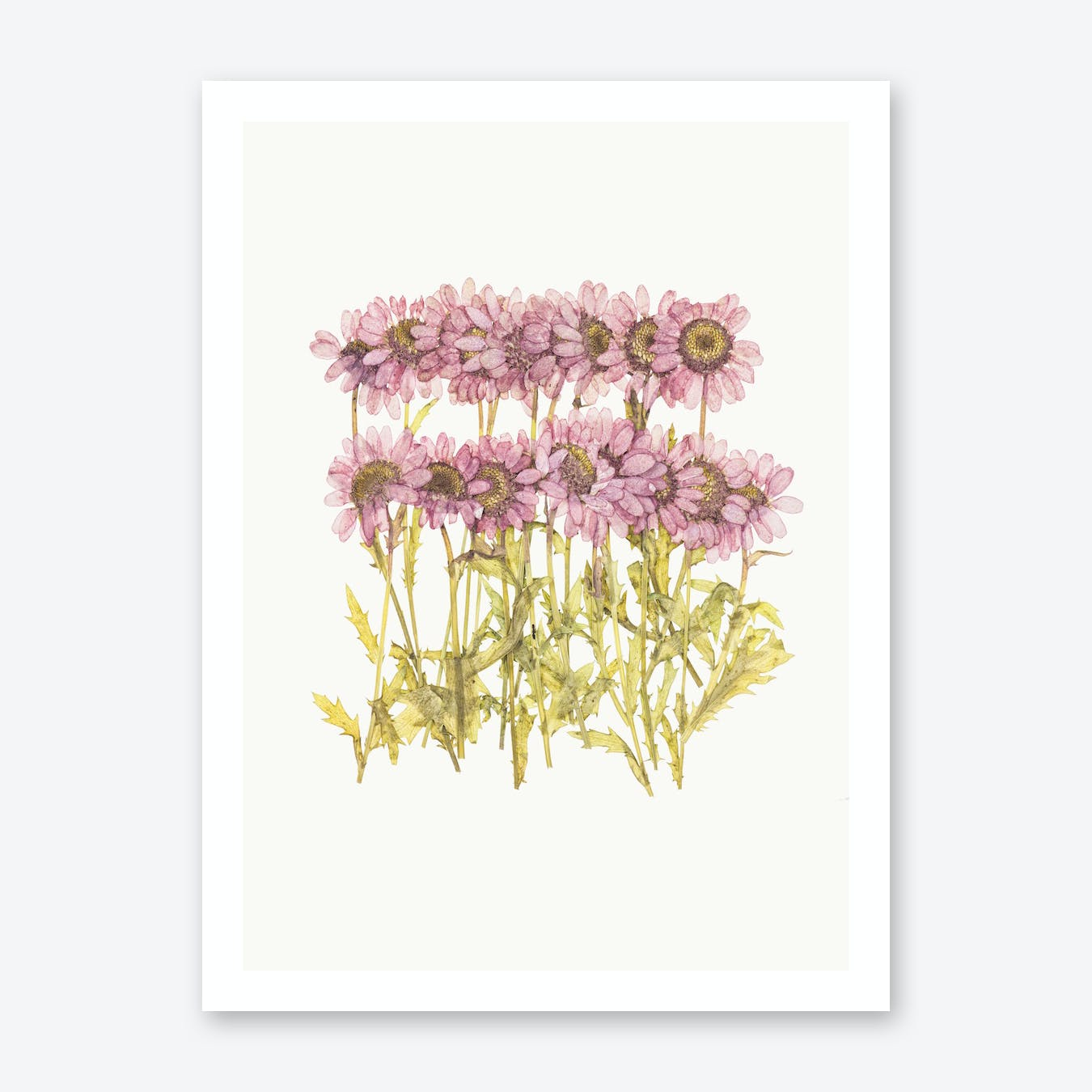 Flower II Print