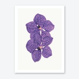 Flower VI Art Print