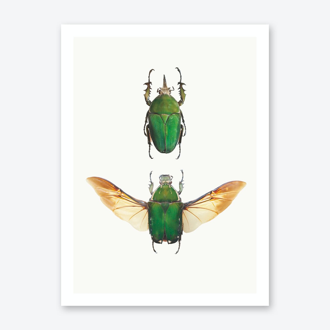 Insects II Print
