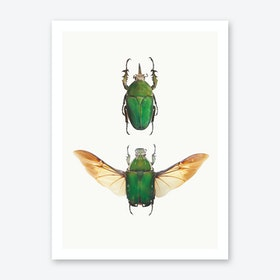 Insects II Art Print