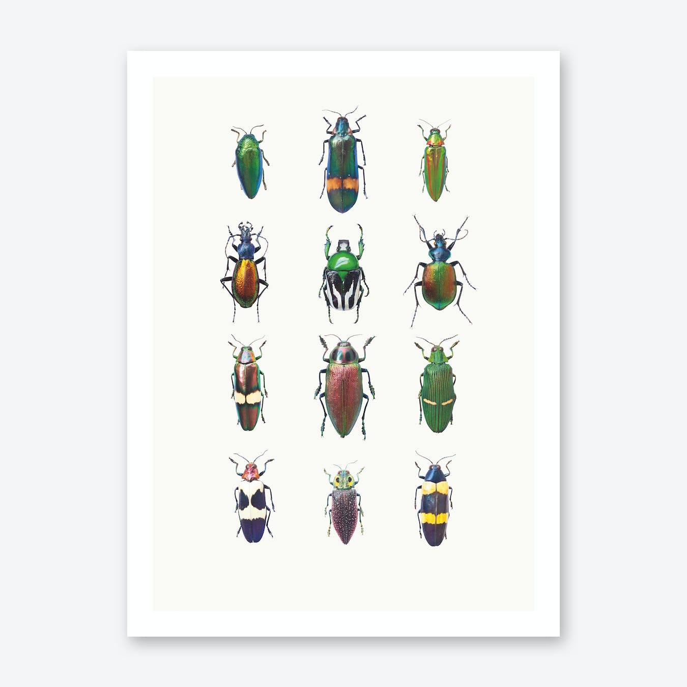 Insects III Print