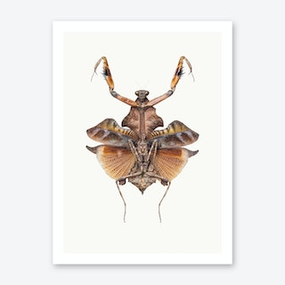 Insects VI Art Print
