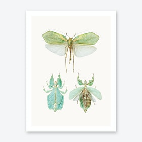 Insects VII Art Print