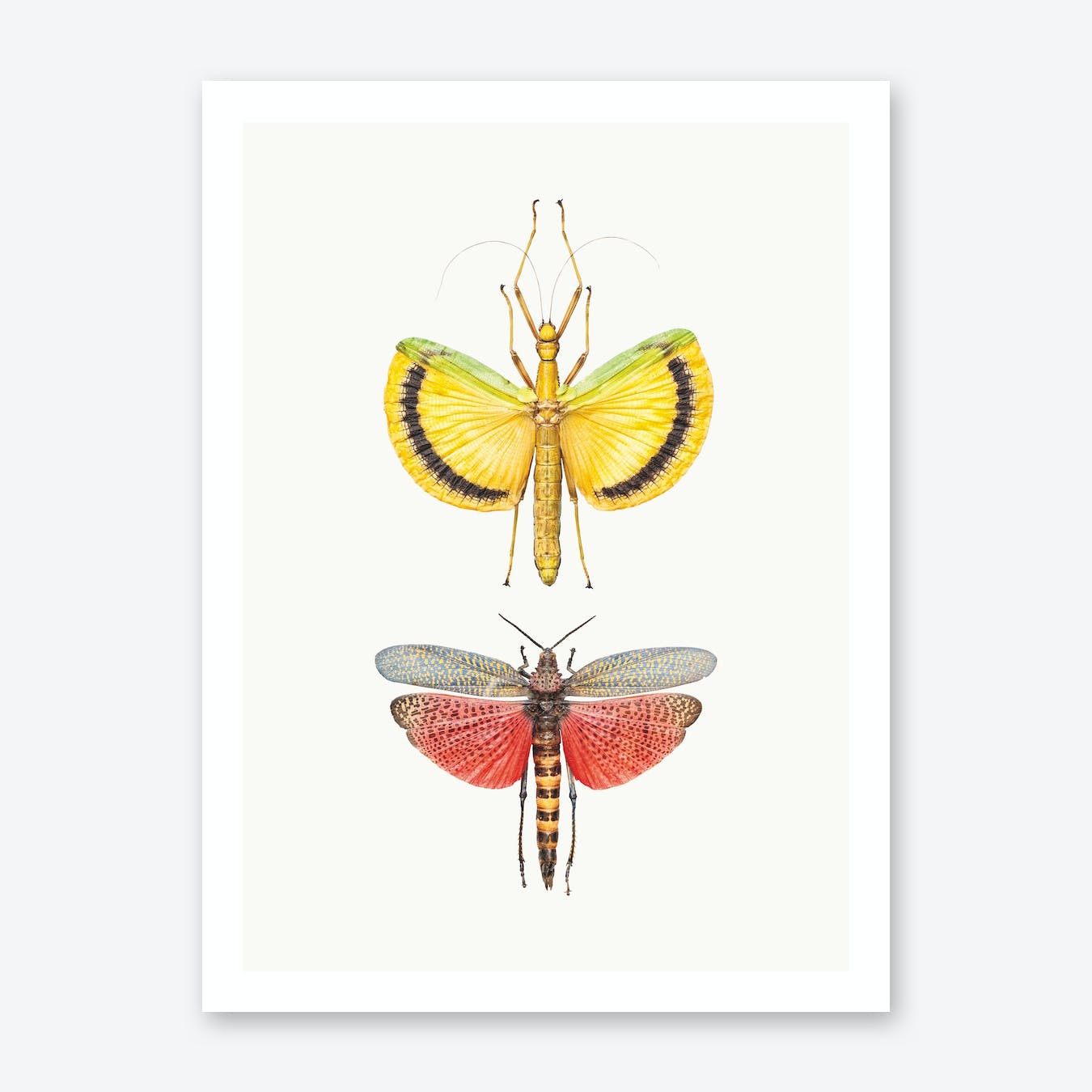 Insects VIII Print