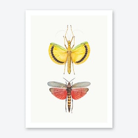 Insects VIII Art Print