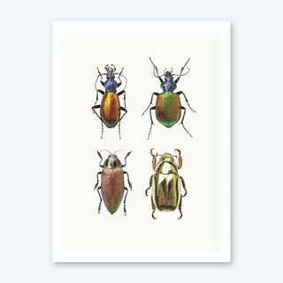 Insects IX Art Print