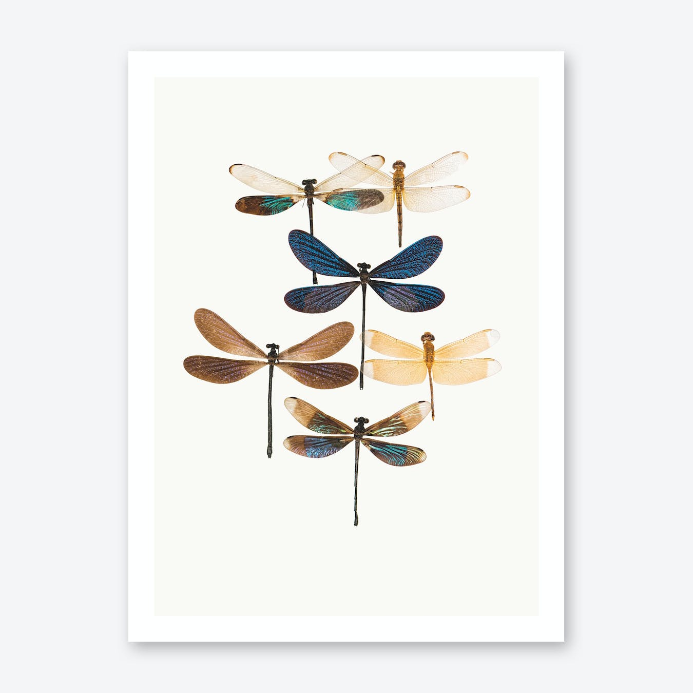 Insects X Print