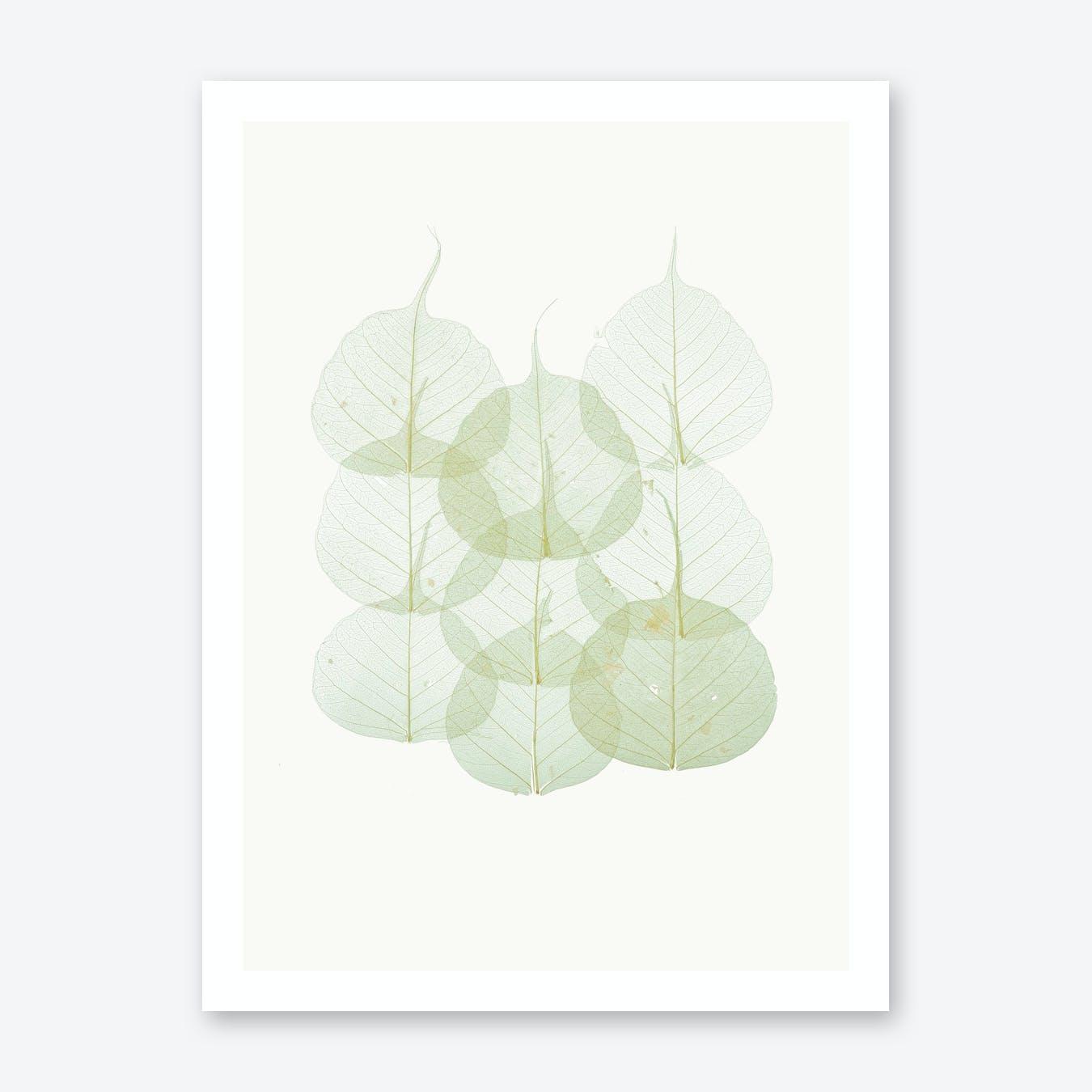 Leaves II Print