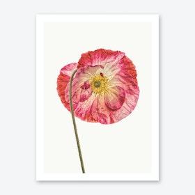 Poppy IV Art Print