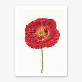 Poppy V Art Print