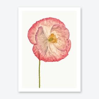 Poppy VI Art Print