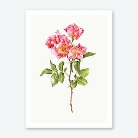 Roses II Print