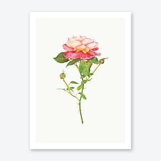 Roses III Art Print