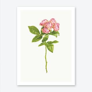 Roses IV Art Print