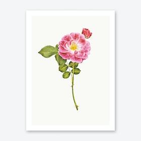 Roses V Art Print