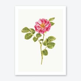 Roses VI Art Print