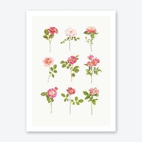 Roses VII Print