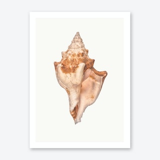 Shell I Art Print