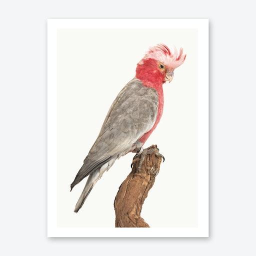 Birds II Print