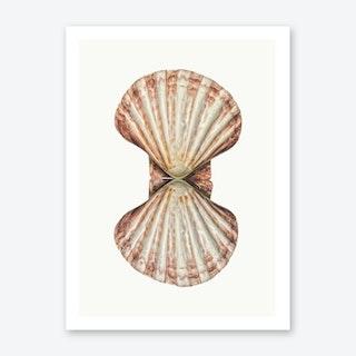 Shell VI Art Print