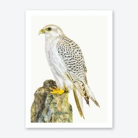 Birds III Art Print