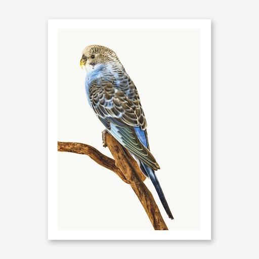 Birds IV Print