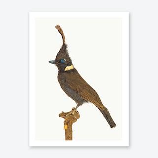 Birds V Art Print