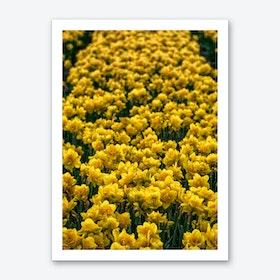 Field of Narcissus Art Print