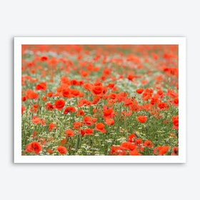 Field of Poppies 2 Art Print