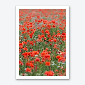 Field of Poppies 1 Art Print