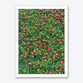 Field of Tulips 2 Art Print