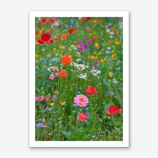 Field of Wild Flowers 1 Art Print