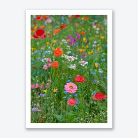 Field of Wild Flowers 1 Art Print