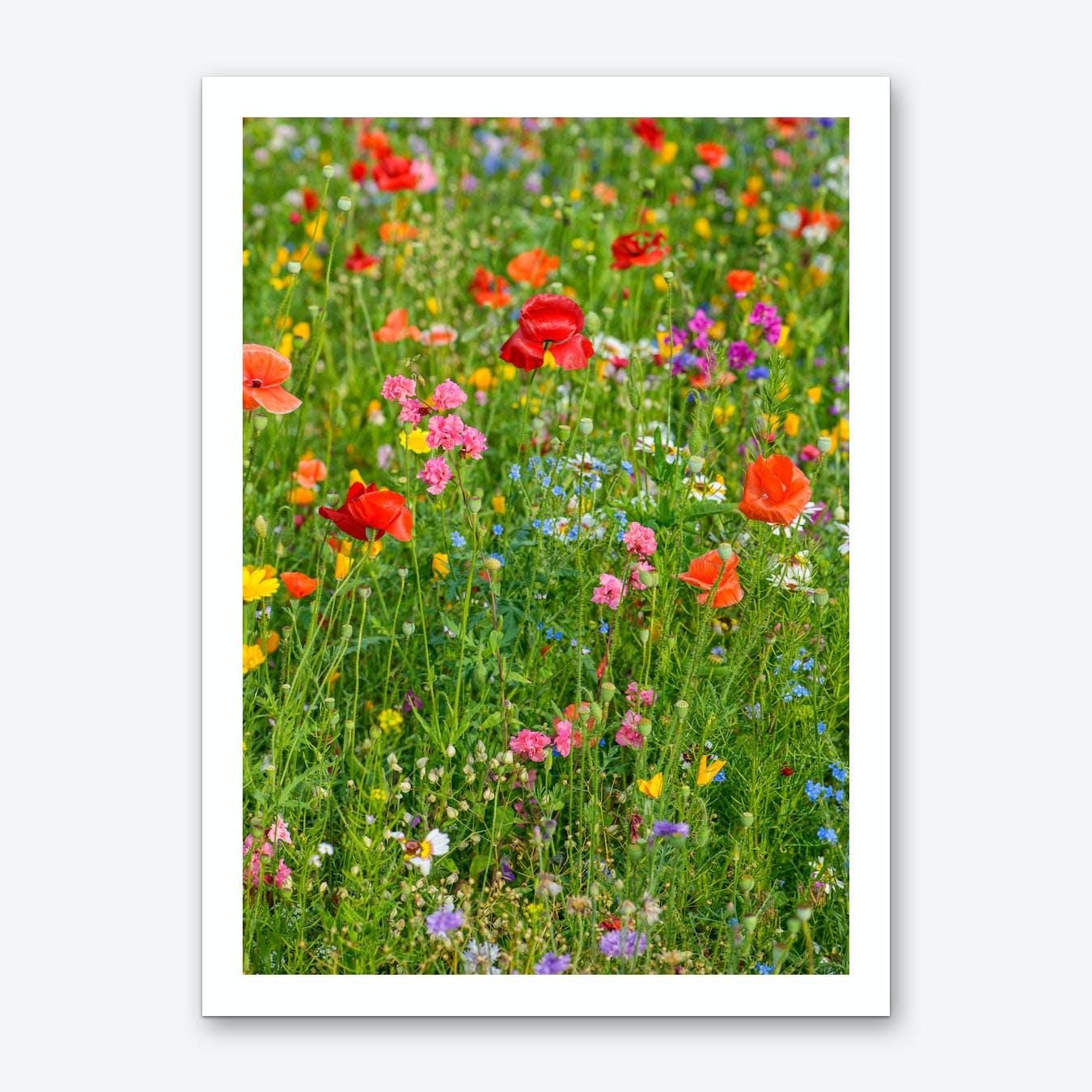 Field of Wild Flowers 2 Art Print