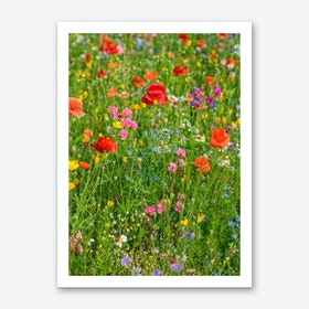 Field of Wild Flowers 2 Art Print