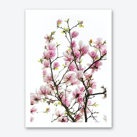Pink Magnolia Branches Art Print