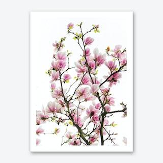 Pink Magnolia Branches Art Print