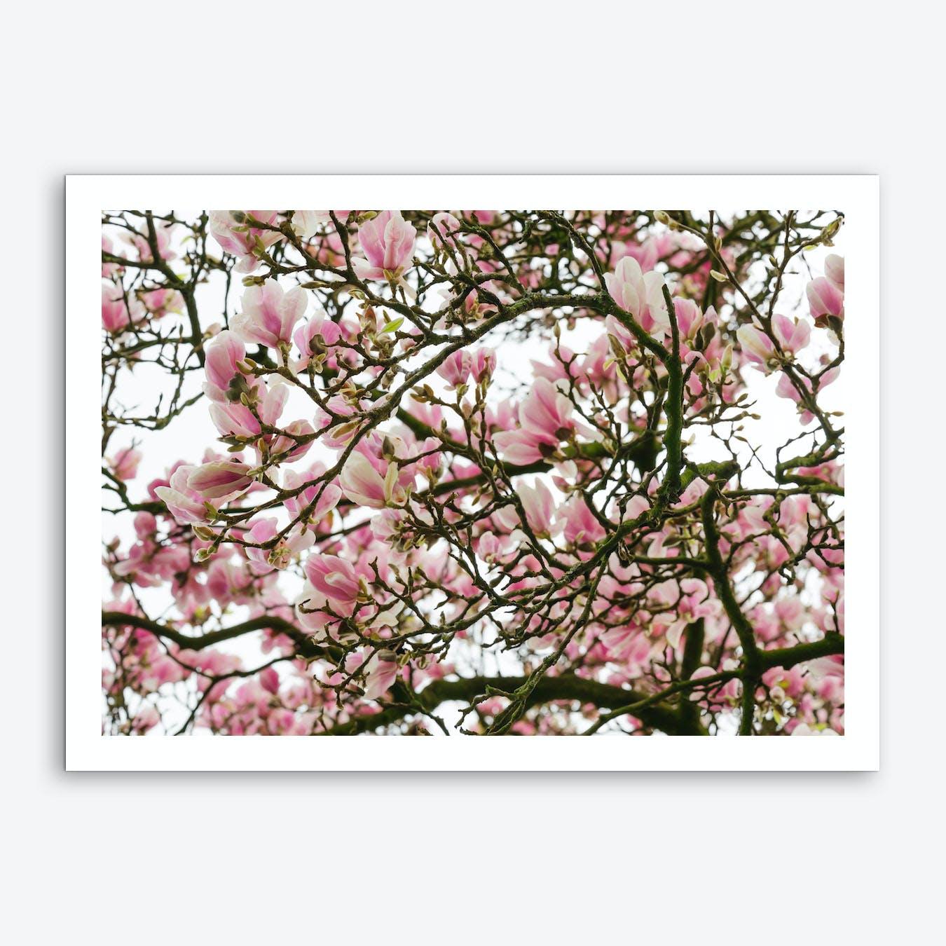 Pink Magnolia Tree Art Print