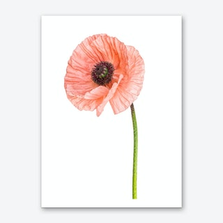 Poppy Pink 01 Art Print