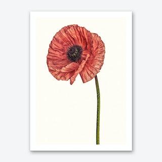 Poppy Pink 01 B Art Print
