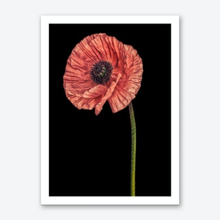 Poppy Pink 02 Art Print