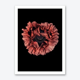 Poppy 03 Art Print