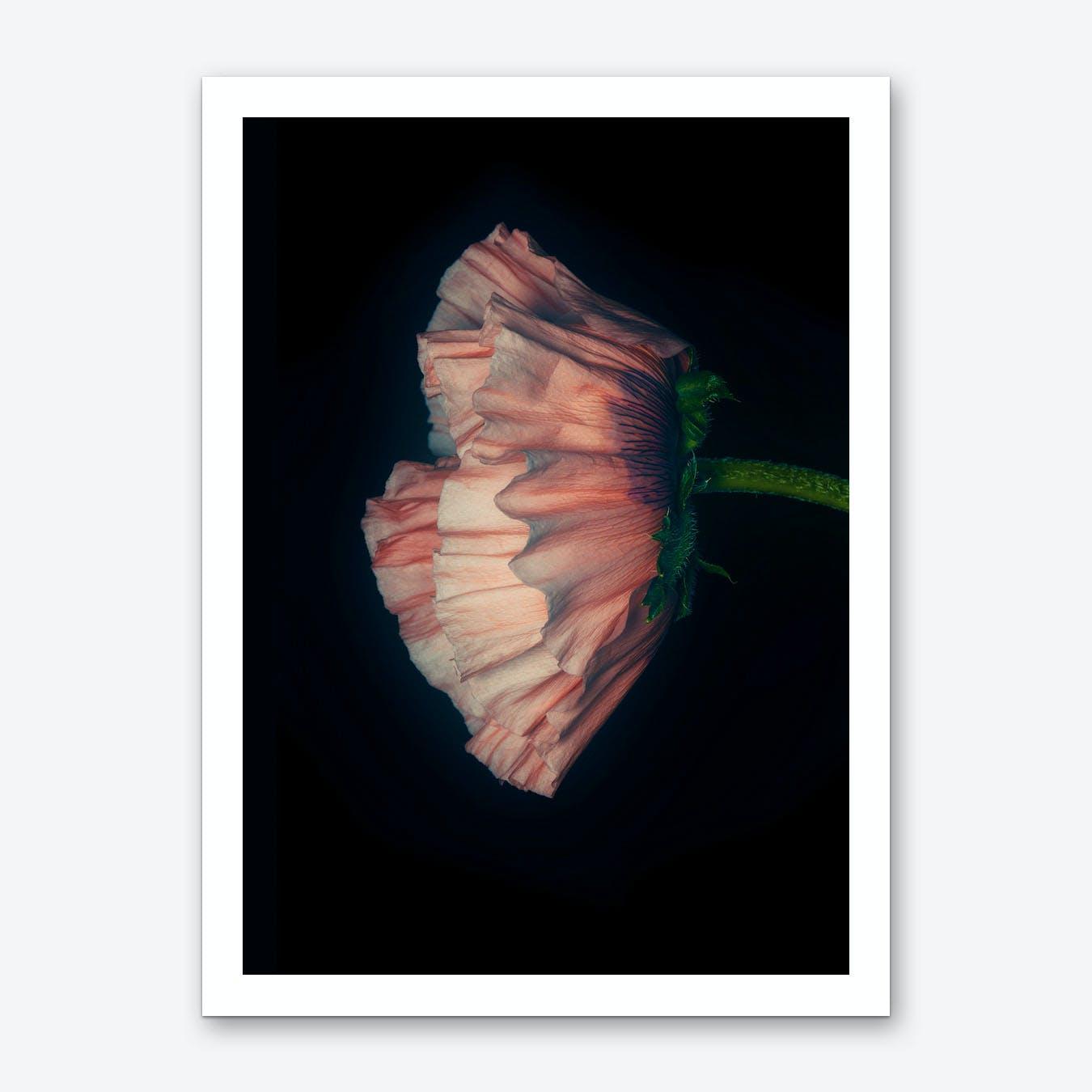 Poppy Pink 04 B Art Print