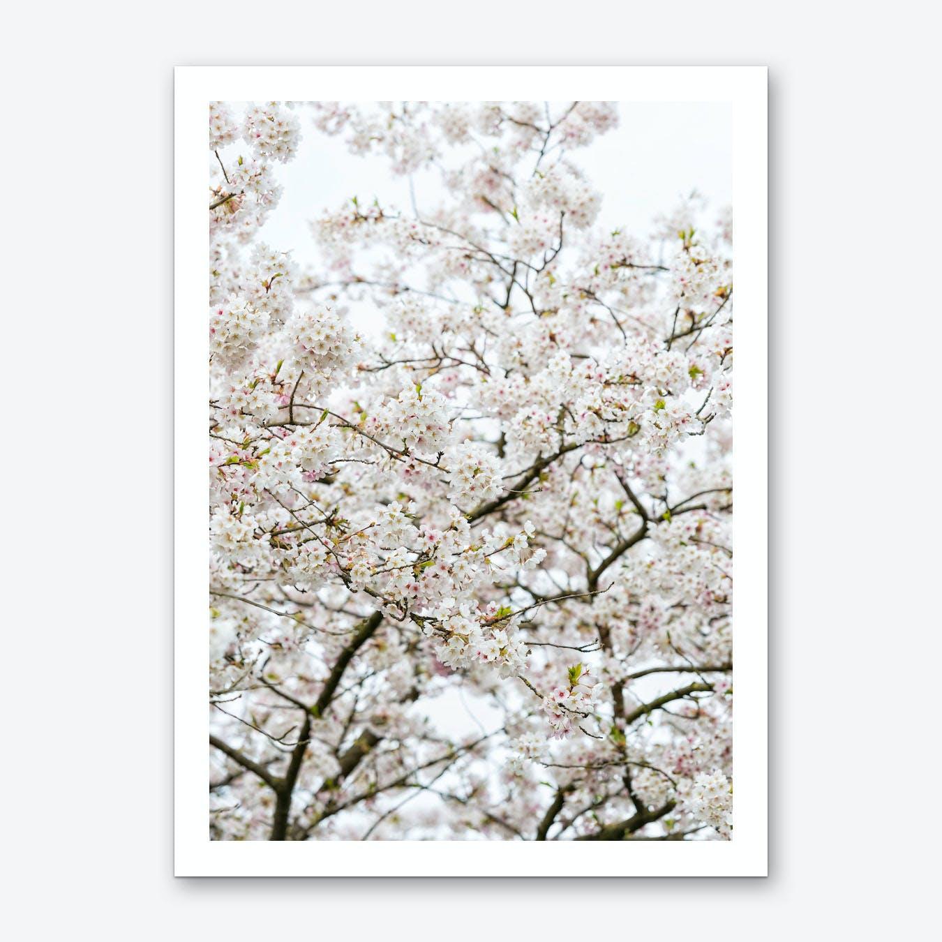 Blossom Tree 02 Art Print