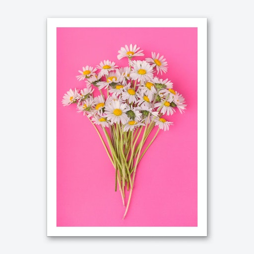Daisies on Pink Art Print