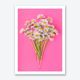 Daisies on Pink Art Print