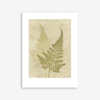 Fern Olive Art Print In 30cm x 40cm